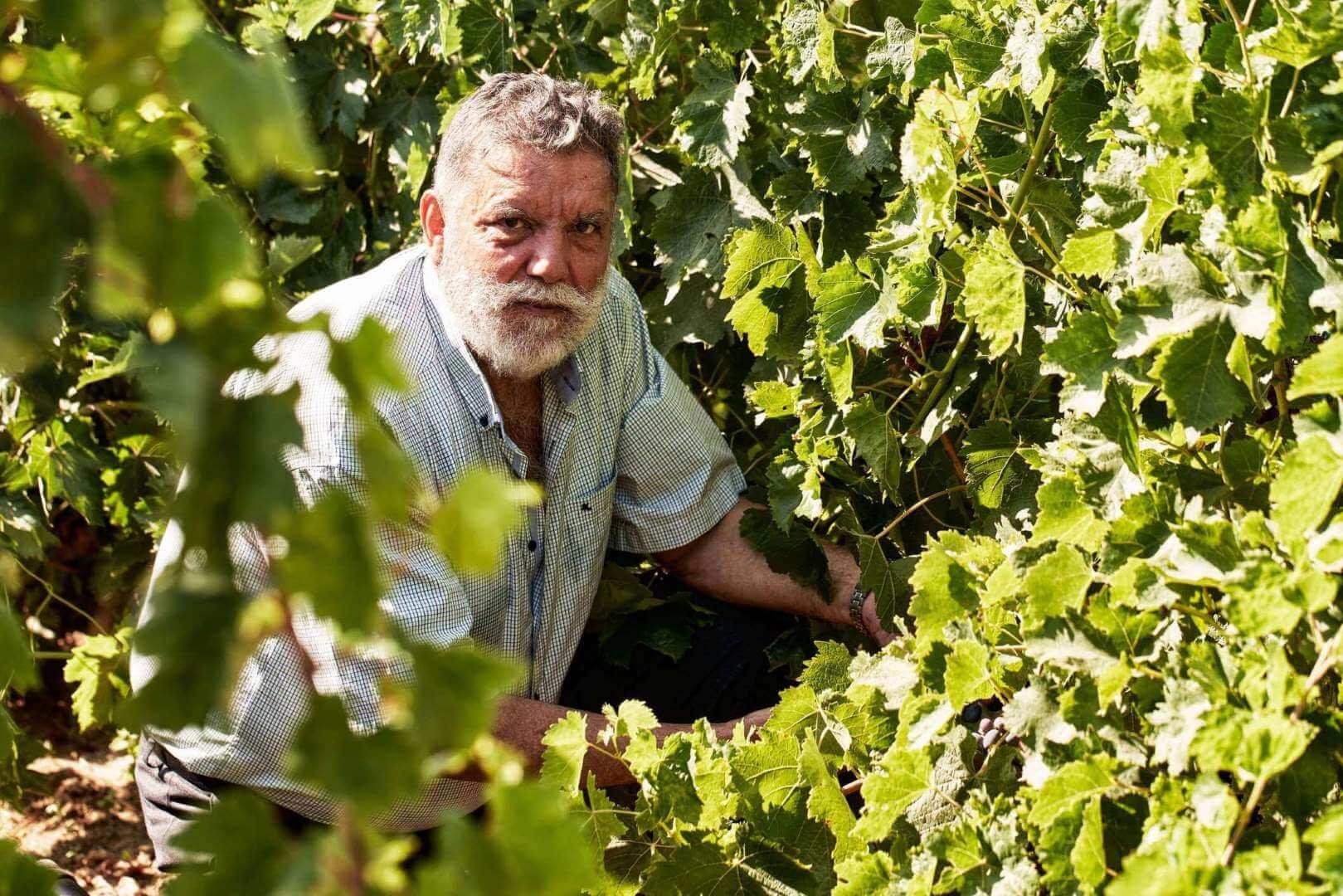 wnery-naxos-grapes (1)